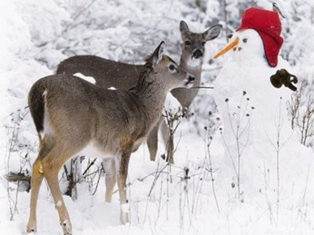 Wild Animal snow pets Birds animals zone Animals Pictures  Trouble in the Snow