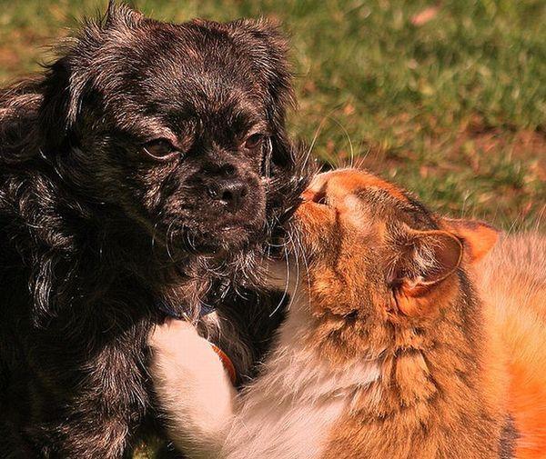 Dog Cat Secrets 10 Secrets of Dogs and Cats