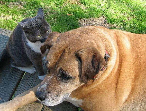Dog Cat Secrets 11 Secrets of Dogs and Cats