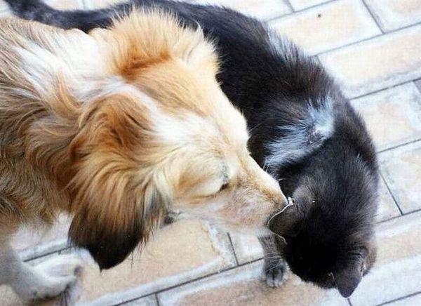 Dog Cat Secrets 8 Secrets of Dogs and Cats