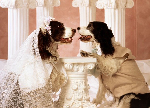 cutest animal wedding animals zone