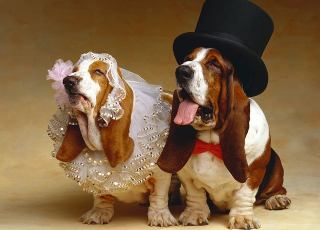Wild Animal wedding photos pets animals zone Animals Pictures  Cutest Animal Wedding