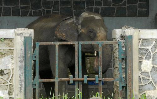Six of the saddest zoos in the world | Animals Zone