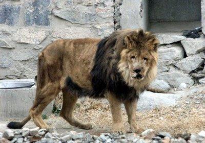 ...à trouver un zoo, Kaboul ne peut pas être au top de votre liste.