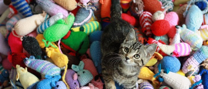 Cats-New-Toys-6