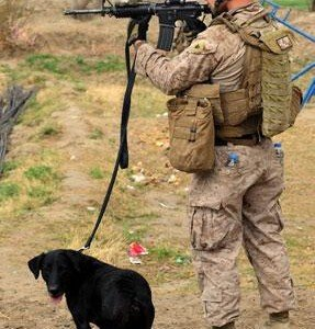 Four-Legged-Warriors -1