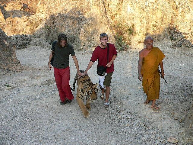 Visitors Say Goodbye to a Tiger