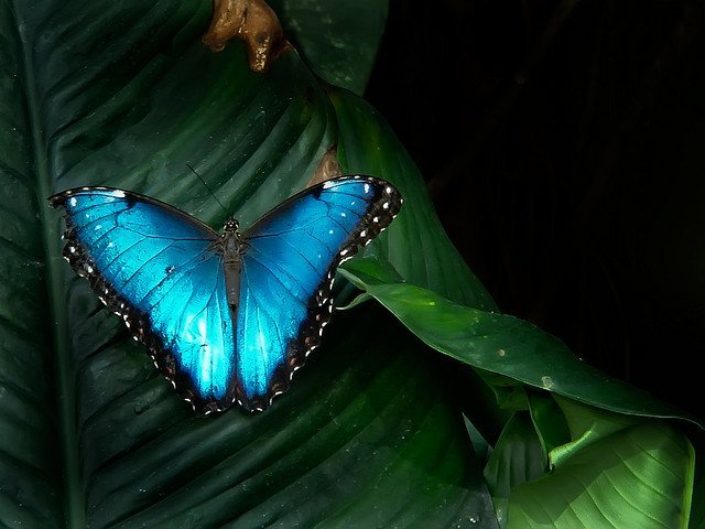 Blue Butterfly on Leaf