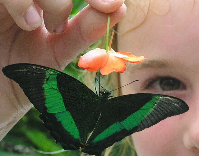 Girl Playing with Green Butterfly
