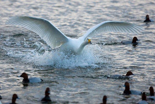 Albatross Biggest Bird of Flight