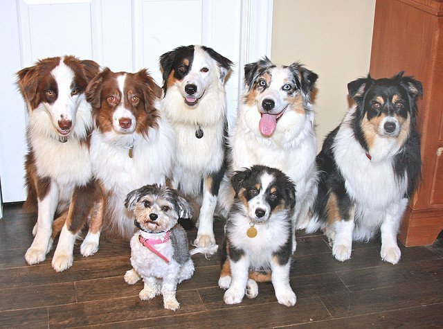Pack of 7 dogs