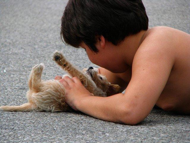 Puppy with boy