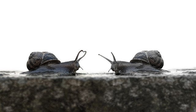 Snail slow Lovers
