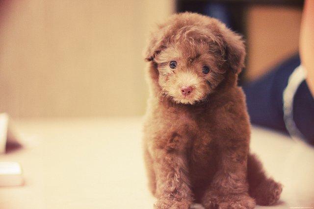 guilty sad puppy