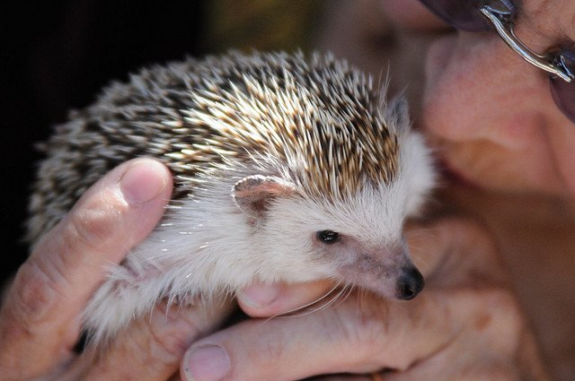 man a kissing hedgehog