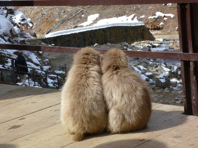 snow monkeys holding hands