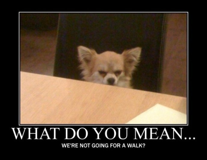 Angry Dog ridiculously funny animal memes for 2013 animals zone