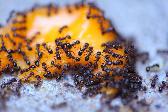 million ants per human