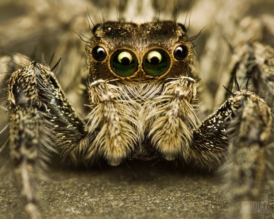 animals scariest most spider scary spiders seen jumping salticidae zone photographs ah path crawl ve classic skin beware