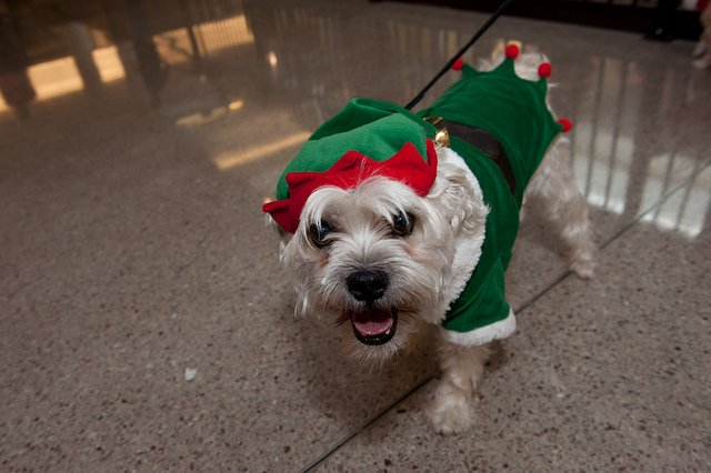 elf-dog & Dogs in Christmas Costumes | Animals Zone