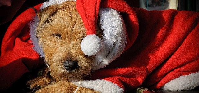 little-santa