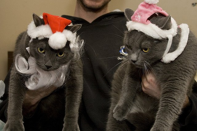 Cats in Christmas Costumes | Animals Zone