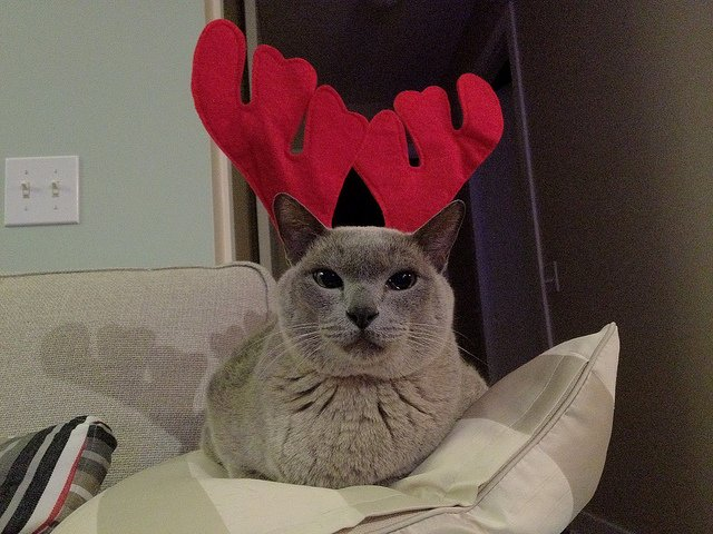 Cats In Christmas Costumes Animals Zone