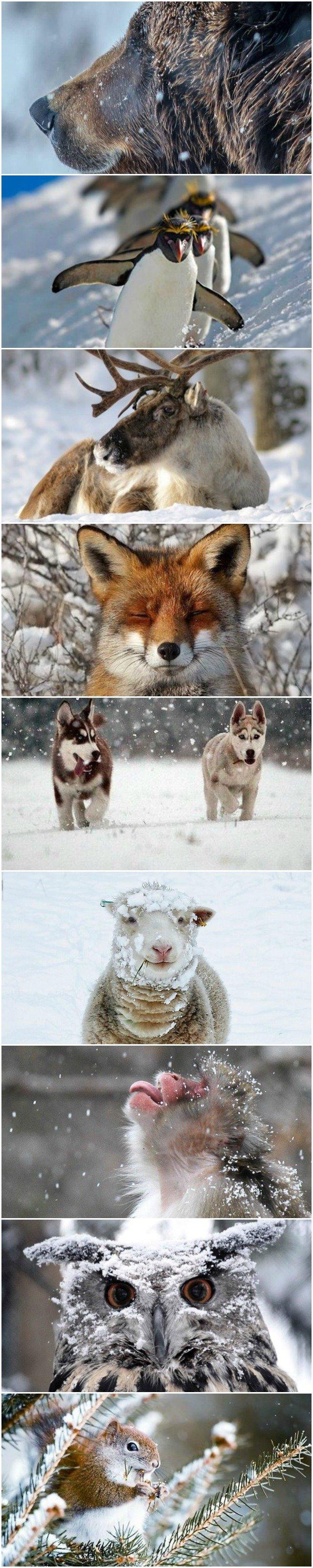 animals-enjoying-the-snow