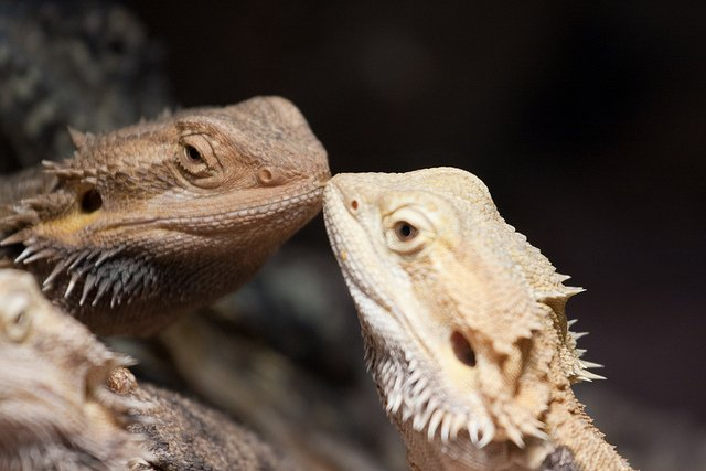 17 Photos Of Adorable Animals Kissing