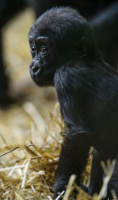 Baby Born At 25 Weeks: Adorable Baby Animal Pictures (Part 2)
