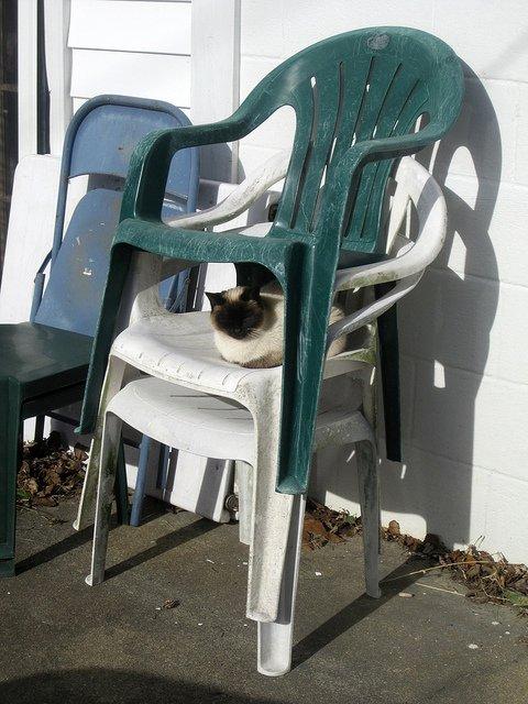 cat-sleeping-between-chairs