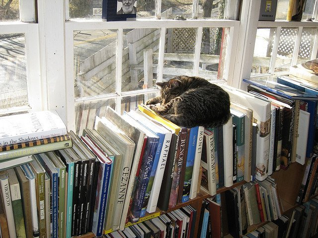 cat-sleeping-in-a-bookstore