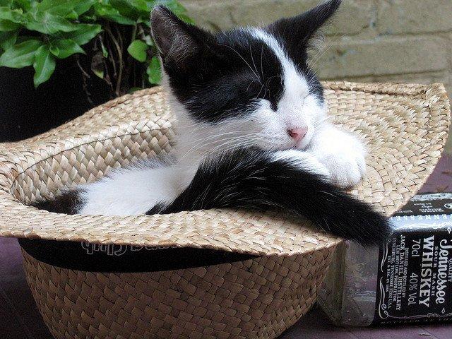 cat-sleeping-in-a-hat