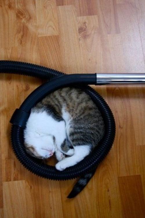 cat-sleeping-weird-place
