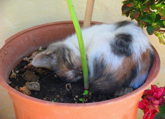 kitten-sleeping-in-a-flowerpot