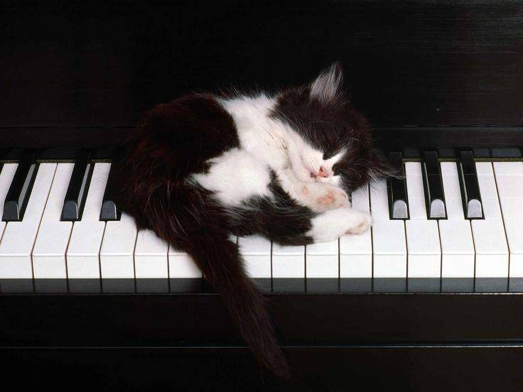 kitten-sleeping-on-a-piano