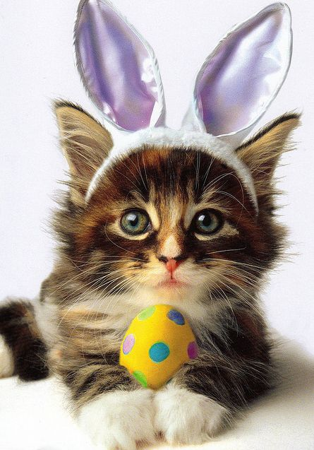 http://www.animals-zone.com/wp-content/uploads/2014/04/cute-bunny-cat.jpg