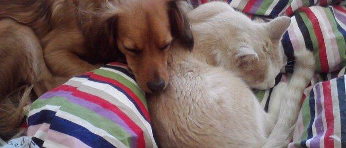 Canelo compartiendo cama con uno de sus hermanos gatunos