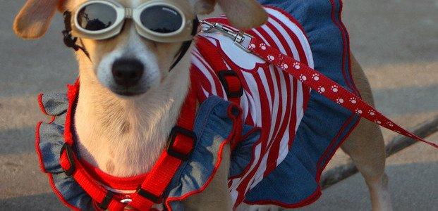 patriotic-dog-posing