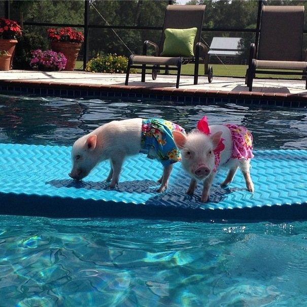 Enjoying the pool | Animals Zone