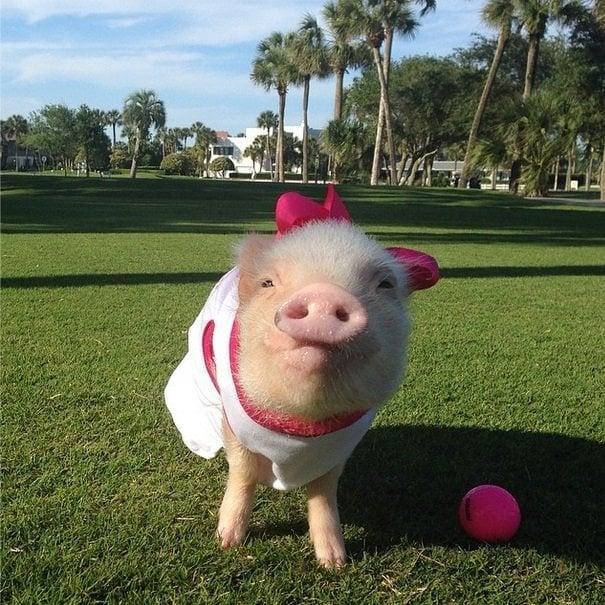 Golf time! | Animals Zone
