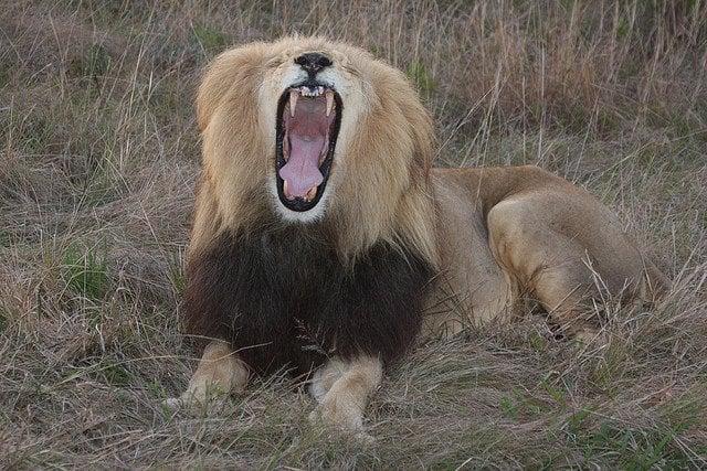 Roar   Animals Zone