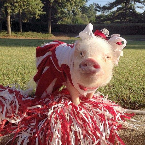 Piggy Fan | Animals Zone