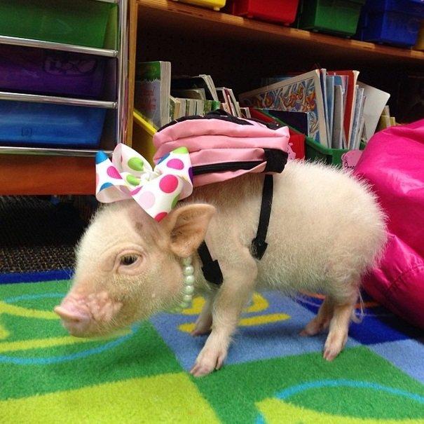 Back to school | Animals Zone