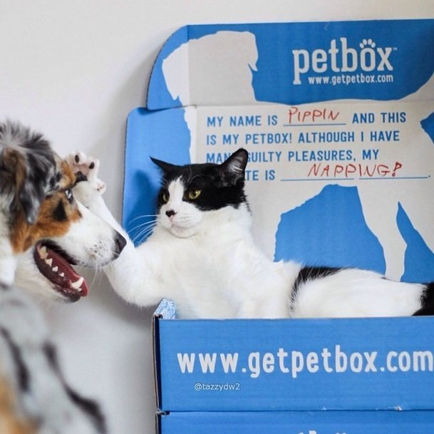 Cat and dog enjoying their box full of surprises | Animals Zone #win one for your pet!
