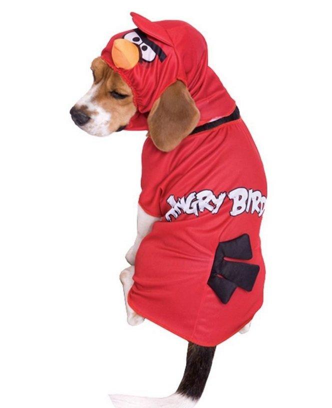 Angry Birds Costume | Animals Zone