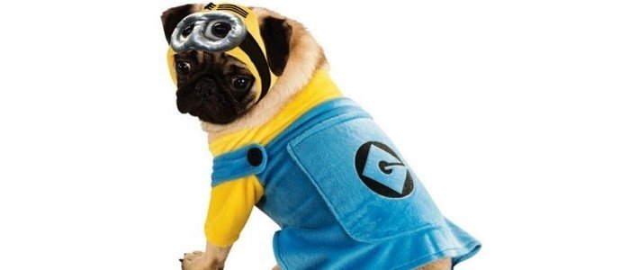 minion-pet-costume-featured