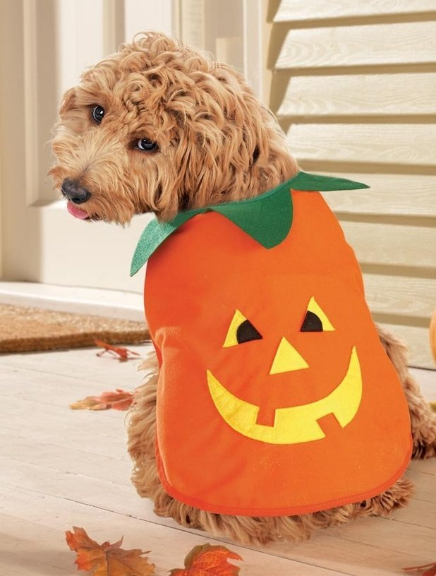 Pumpkin Costume | Animals Zone