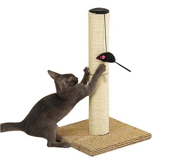 Scratching Cat Post | Animals Zone