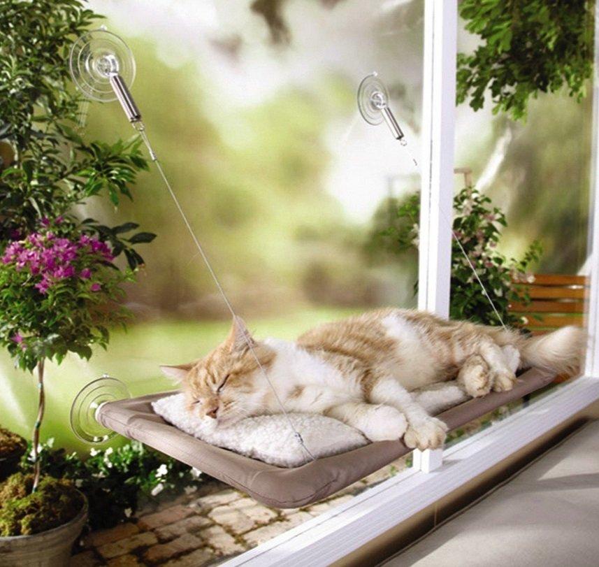 Cat Window Seat | Animals Zone